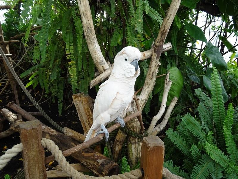 Il pappagallo della Biosfera a Genova