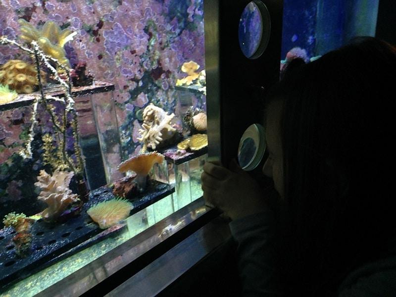area spongebob acquario di Genova