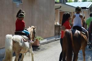 Duca Amedeo pony